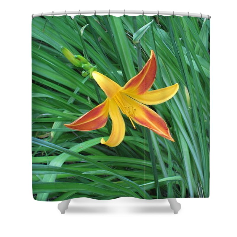 Flowers Shower Curtain featuring the photograph All Alone by Rebecca Mento