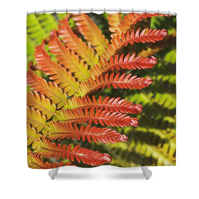 Abstract Shower Curtain featuring the photograph Amaumau Fern Frond by Greg Vaughn - Printscapes