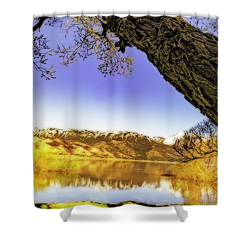 Shower Curtain featuring the photograph Ancient Trees by Nancy Marie Ricketts