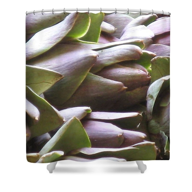 Venice Shower Curtain featuring the photograph Artichokes by Erla Zwingle