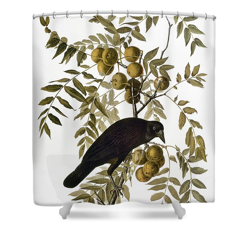 1838 Shower Curtain featuring the photograph Audubon: Crow by Granger
