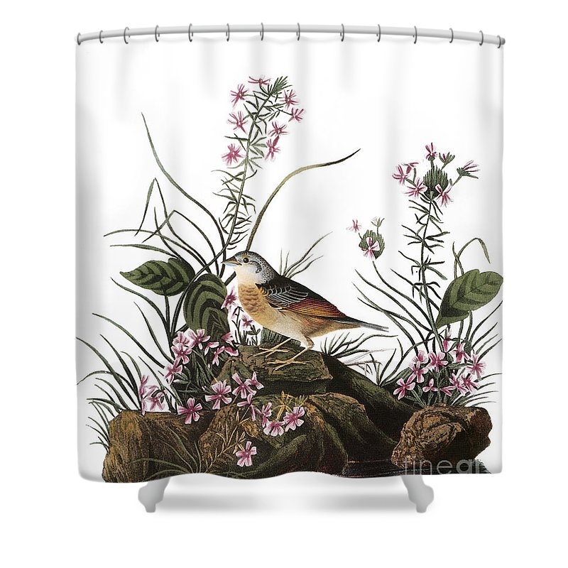 1827 Shower Curtain featuring the photograph Audubon: Sparrow, (1827-38) by Granger