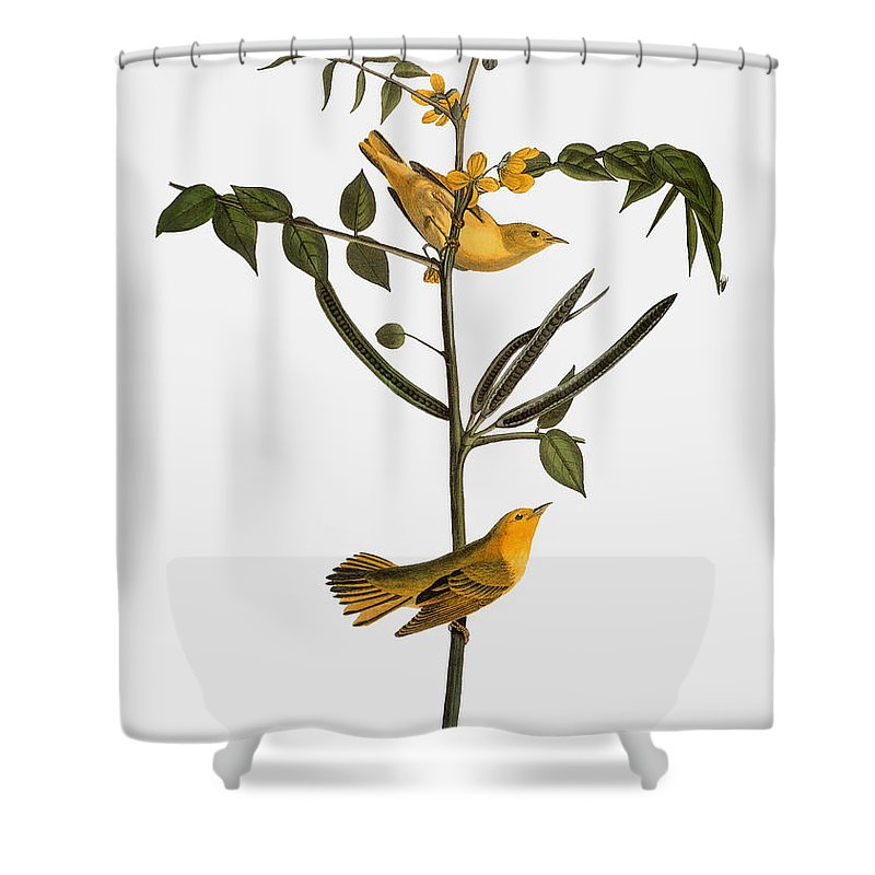 1827 Shower Curtain featuring the photograph Audubon: Warbler, 1827-38 by Granger