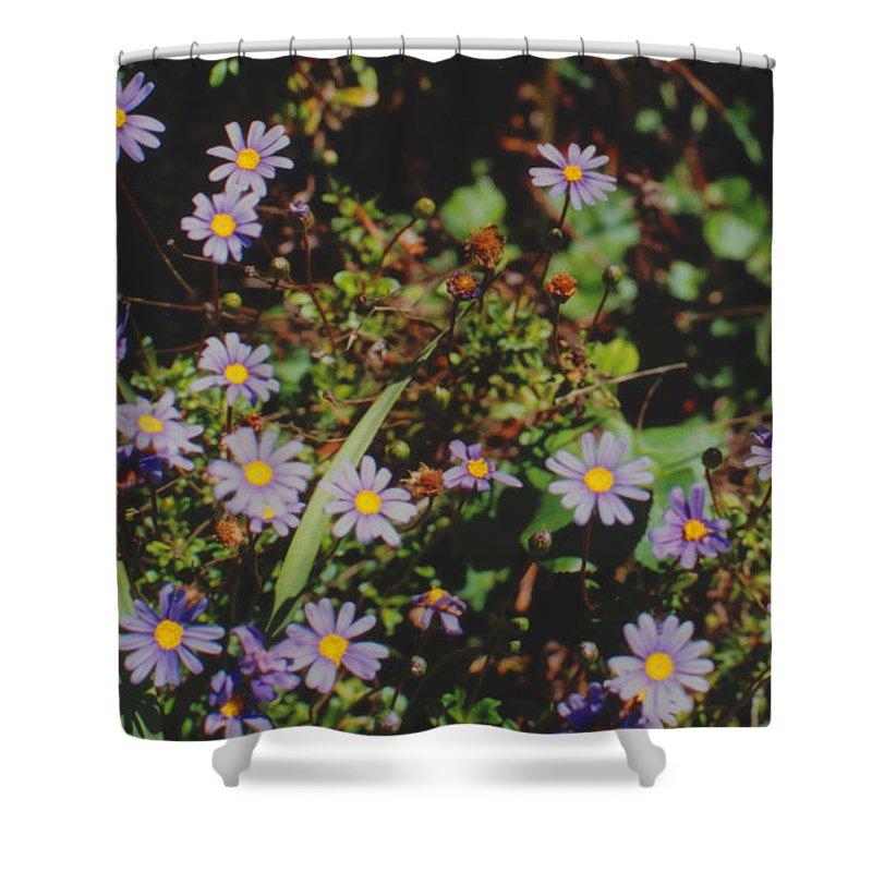 Australia Shower Curtain featuring the photograph Australian Burr Daisies by Ron Swonger