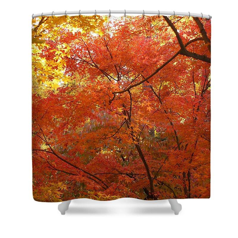 Autumn Shower Curtain featuring the photograph Autumn Gold by Carol Groenen