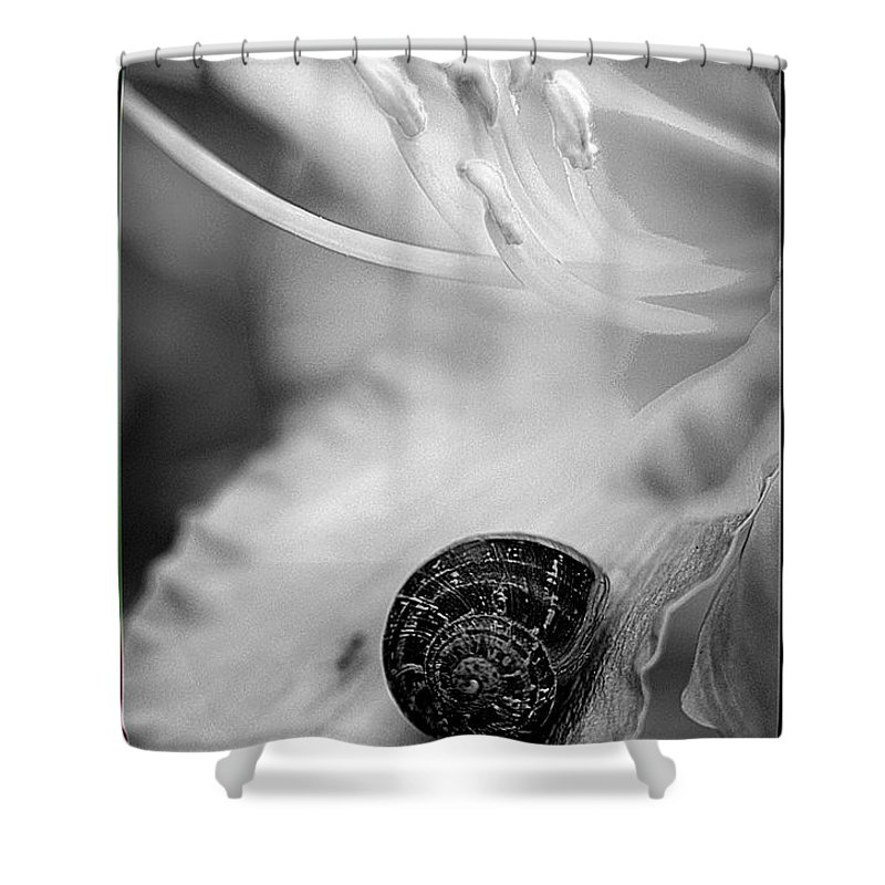 Clay Shower Curtain featuring the photograph B And White Floral With Snail by Clayton Bruster