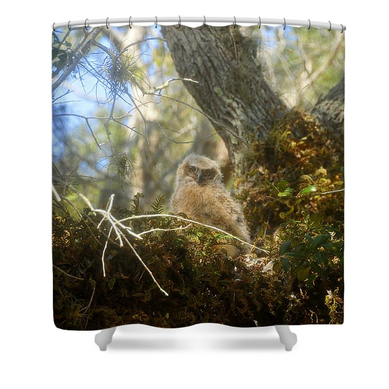 Great Horned Owl Shower Curtain featuring the photograph Babe In The Woods by David Lee Thompson