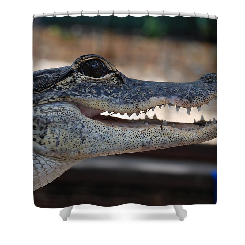 Macro Shower Curtain featuring the photograph Baby Gator by Rob Hans