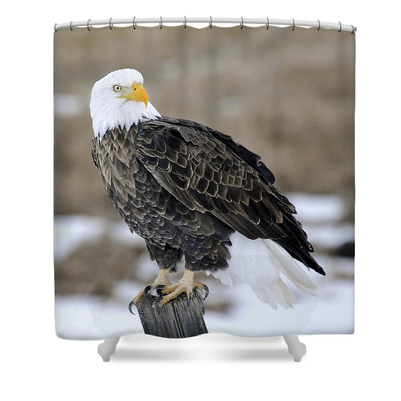 Bald Eagle Shower Curtain featuring the photograph Bald Eagle by Gary Beeler
