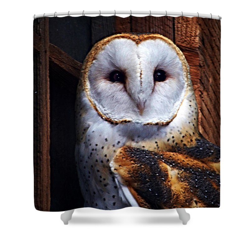 Digital Painting Shower Curtain featuring the photograph Barn Owl by Anthony Jones