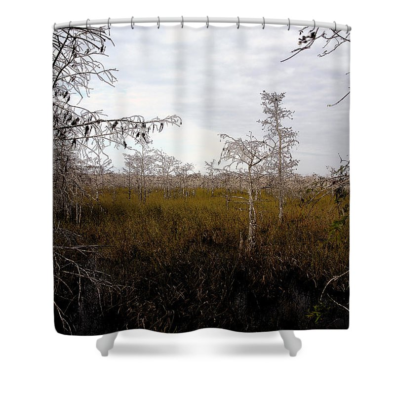 Big Cypress National Preserve Shower Curtain featuring the painting Big Cypress by David Lee Thompson