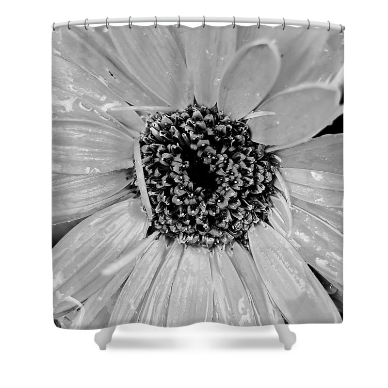 Gerber Daisy Shower Curtain featuring the photograph Black And White Gerbera Daisy by Amy Fose