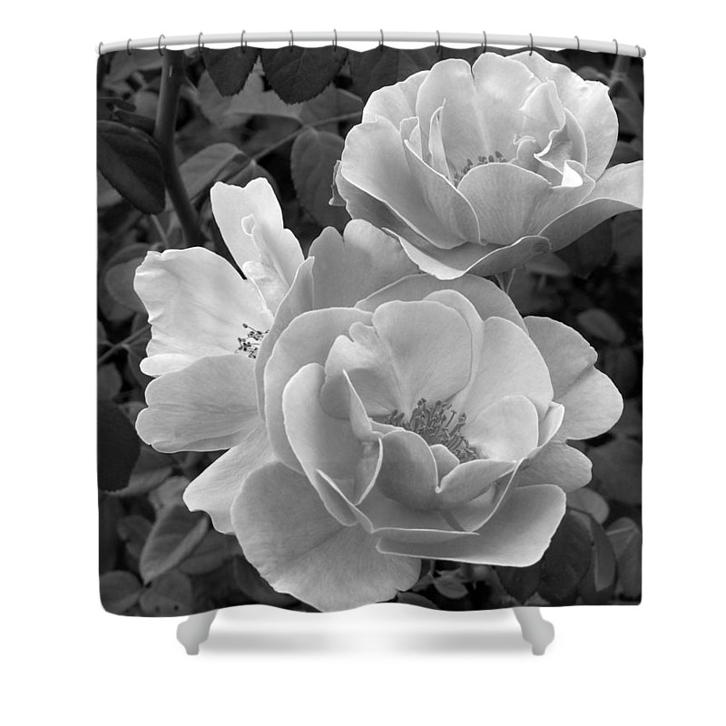 Rose Shower Curtain featuring the photograph Black And White Roses 2 by Amy Fose