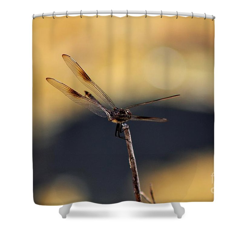 Dragonfly Shower Curtain featuring the photograph Blending In by Mesa Teresita