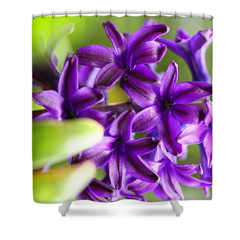Shower Curtain featuring the photograph Bloosome by Kanlayanee Irek