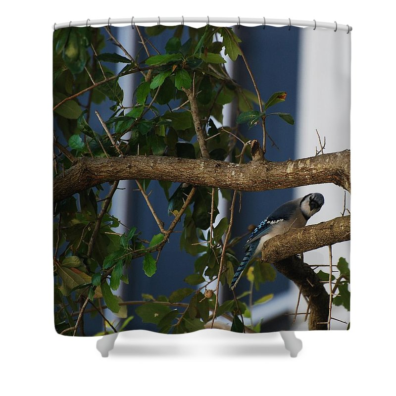 Birds Shower Curtain featuring the photograph Blue Bird by Rob Hans