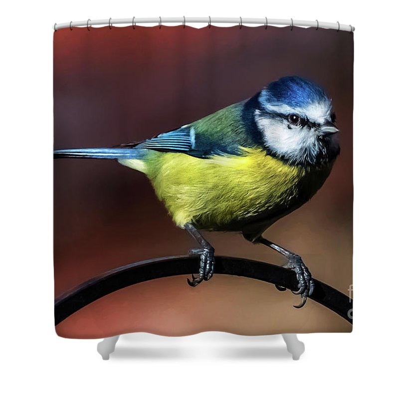Blue Tit Shower Curtain featuring the photograph Blue Tit by Adrian Evans