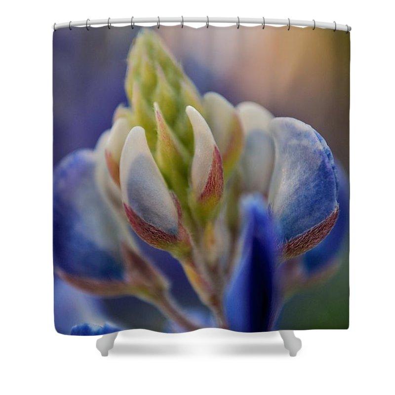 Bluebonnets Shower Curtain featuring the photograph Bluebonnet by Donna Shahan