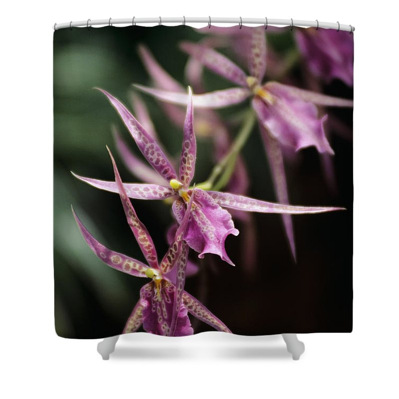 26-pfs0092 Shower Curtain featuring the photograph Branch Of Pink by Allan Seiden - Printscapes