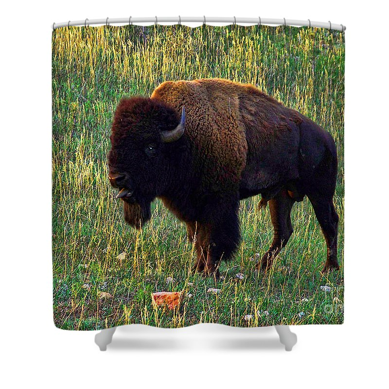 Buffalo Shower Curtain featuring the photograph Buffalo Custer State Park by Tommy Anderson