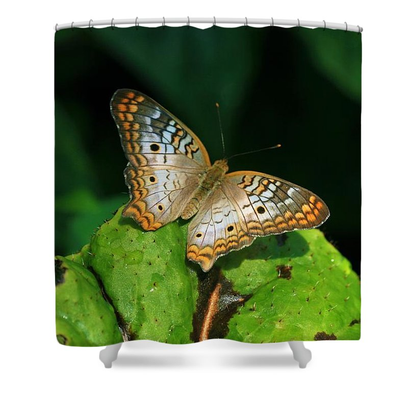 Butterfly Shower Curtain featuring the photograph Butterfly 1 by Kristina Jones