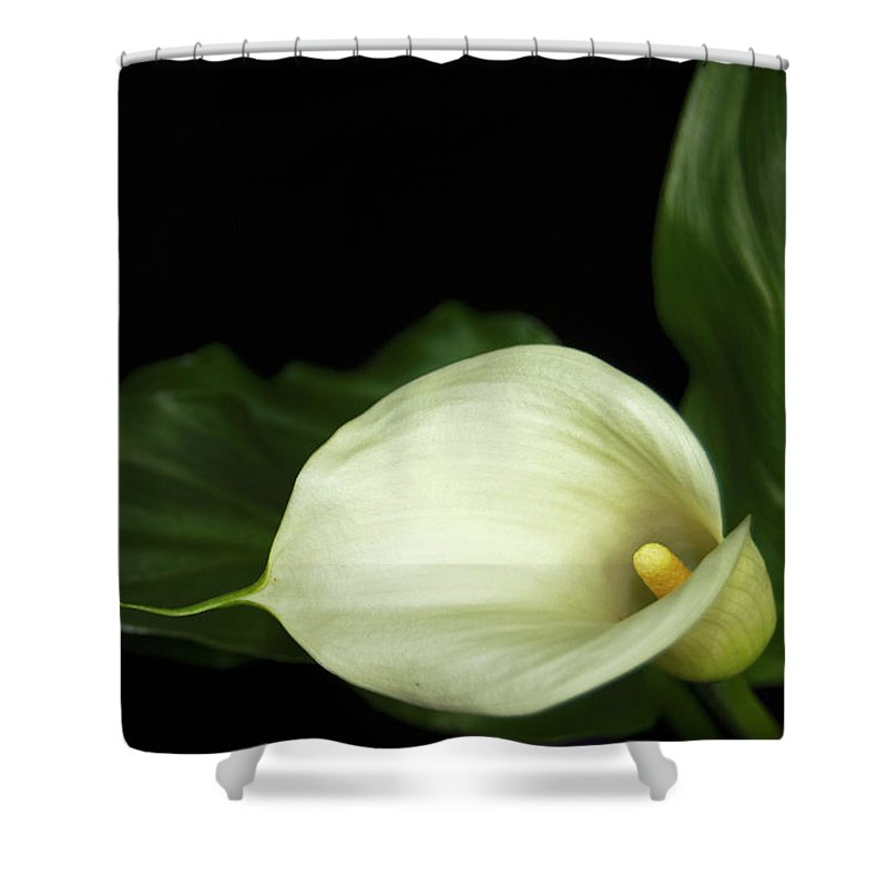 Lily Shower Curtain featuring the photograph Calla Lily by Elsa Marie Santoro
