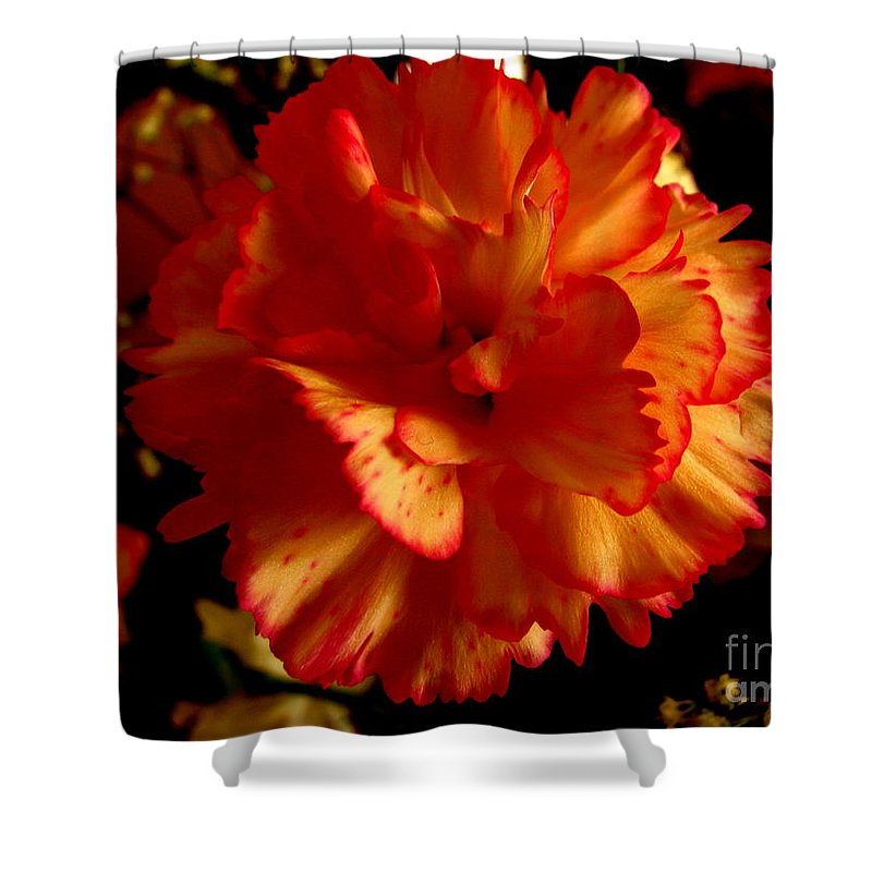 Patzer Shower Curtain featuring the photograph Carnation by Greg Patzer
