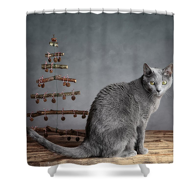 Cat Shower Curtain featuring the photograph Cat Christmas by Nailia Schwarz
