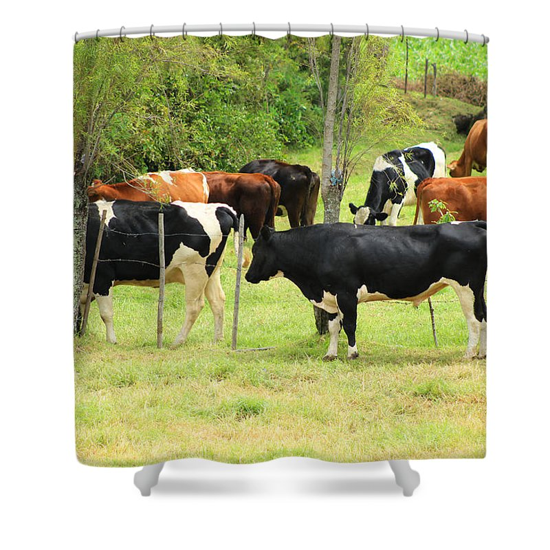 Bull Shower Curtain featuring the photograph Cattle In A Pasture by Robert Hamm