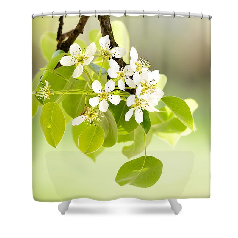Beauty Shower Curtain featuring the photograph Cherry Flowers by Alain De Maximy