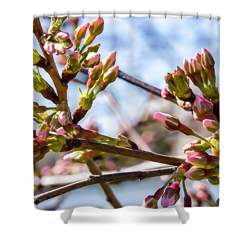 Tree Buds Shower Curtain featuring the photograph Cherry Tree Buds by Carol Ward