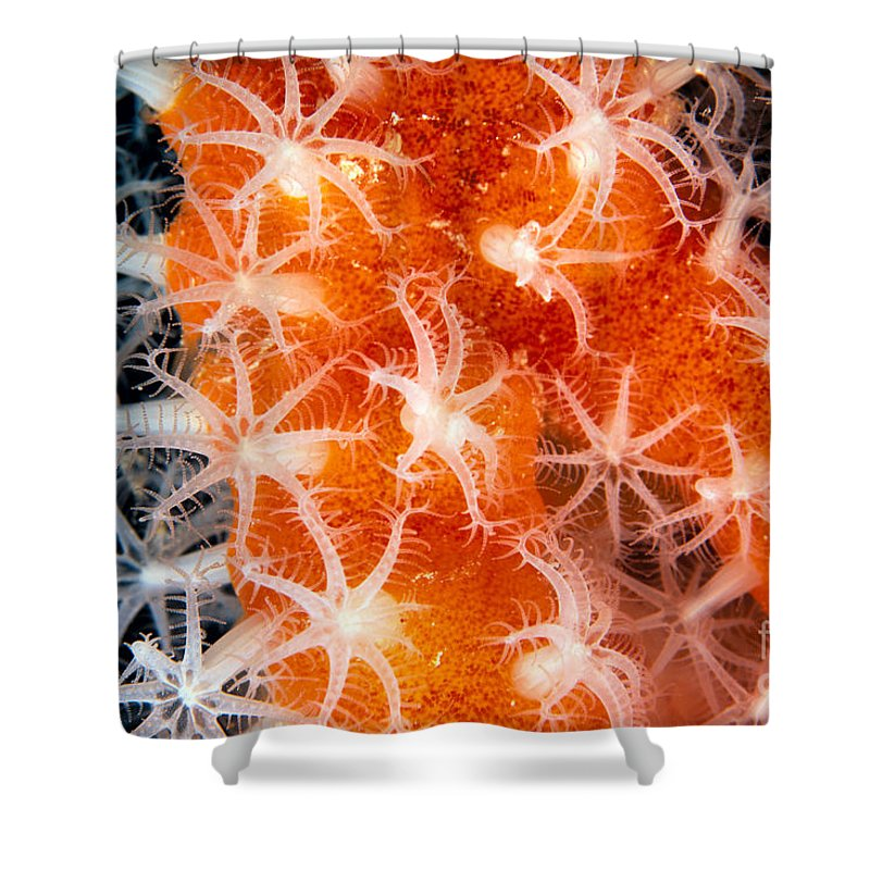 C1916 Shower Curtain featuring the photograph Coral, Close-up by Dave Fleetham - Printscapes