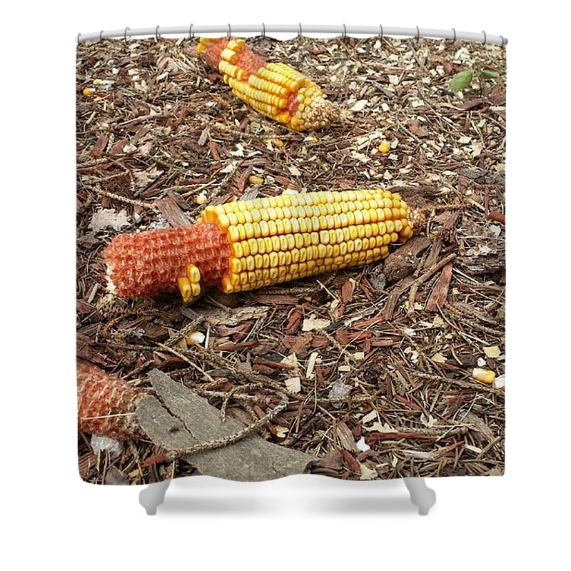 Animals Shower Curtain featuring the photograph Critters Delight by Lesley Kiser