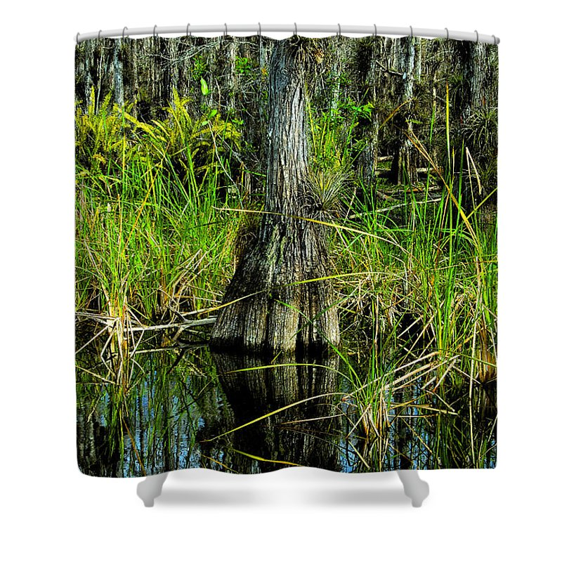 Cypress Trees Shower Curtain featuring the painting Cypress Tree by David Lee Thompson