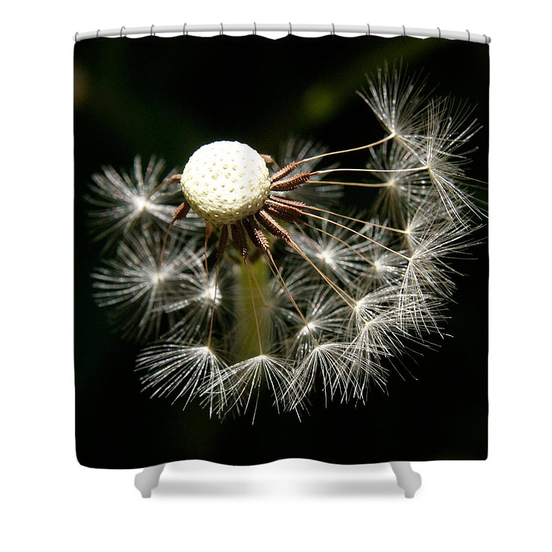 Dandelion Shower Curtain featuring the photograph Dandelion by Ralph A Ledergerber-Photography
