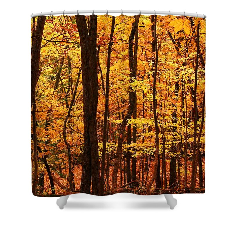 Autumn Shower Curtain featuring the photograph Delicious Autumn by Mitch Cat