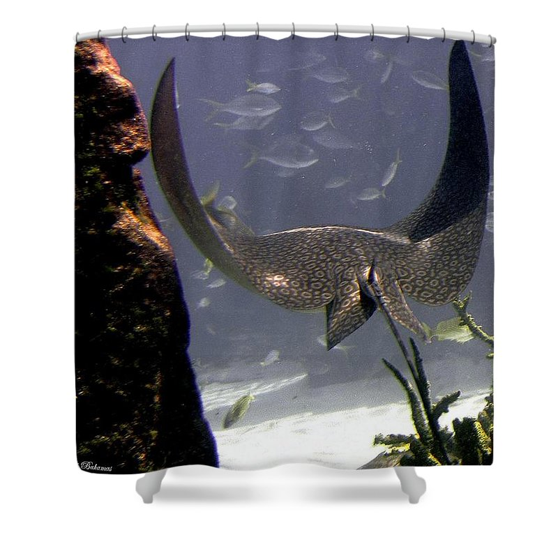 Fish Shower Curtain featuring the photograph Devilray in Paradise by Robert Meanor