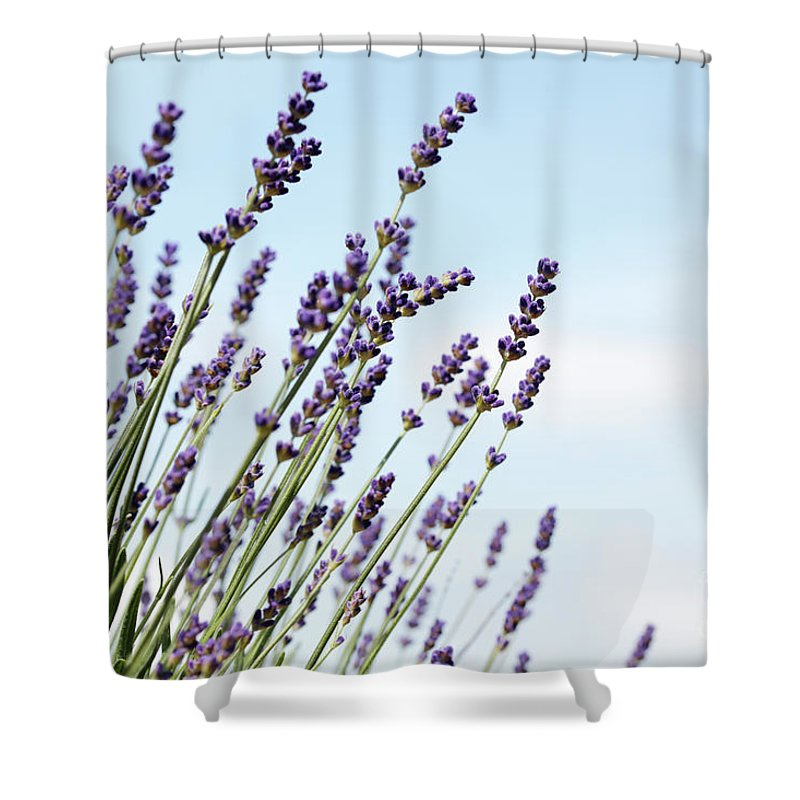 Lavendula Augustifolia Shower Curtain featuring the photograph English Lavender by Neil Overy