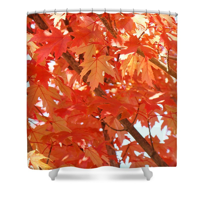 Autumn Shower Curtain featuring the photograph Fall Trees Colorful Autumn Leaves Art Baslee Troutman by Baslee Troutman