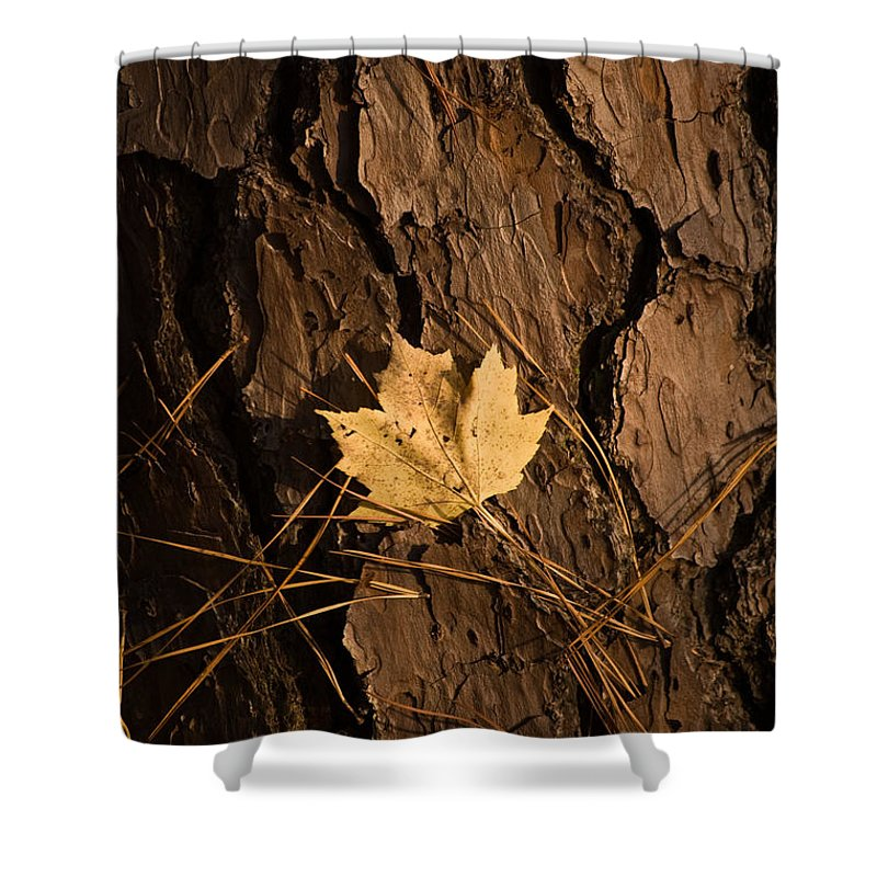Leaf Shower Curtain featuring the photograph Fallen Leaf by Gary Adkins