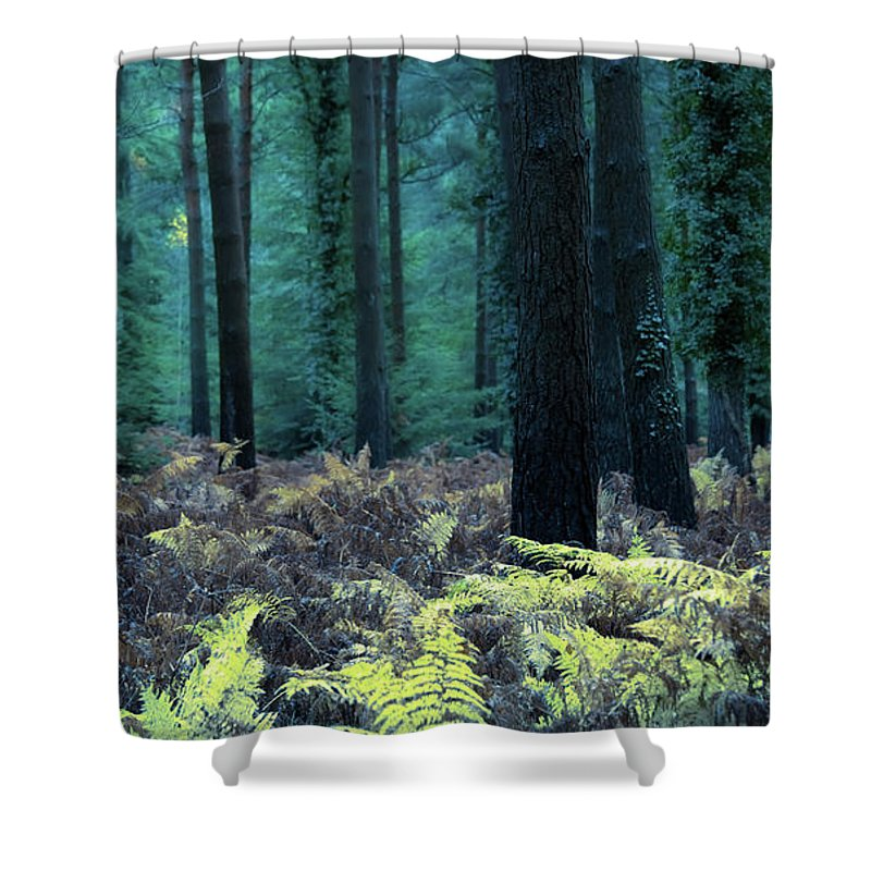 Svetlana Sewell Shower Curtain featuring the photograph Fern by Svetlana Sewell