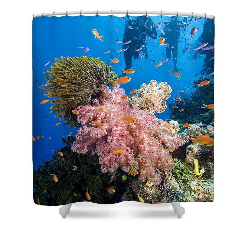 Alcyonarian Shower Curtain featuring the photograph Fiji Underwater by Dave Fleetham - Printscapes