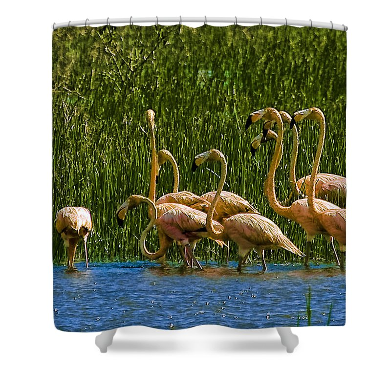 Flamingos Shower Curtain featuring the photograph Flamingo Family by Galeria Trompiz