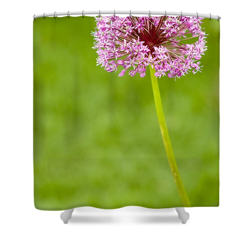 Flower Shower Curtain featuring the photograph Flower by Sebastian Musial