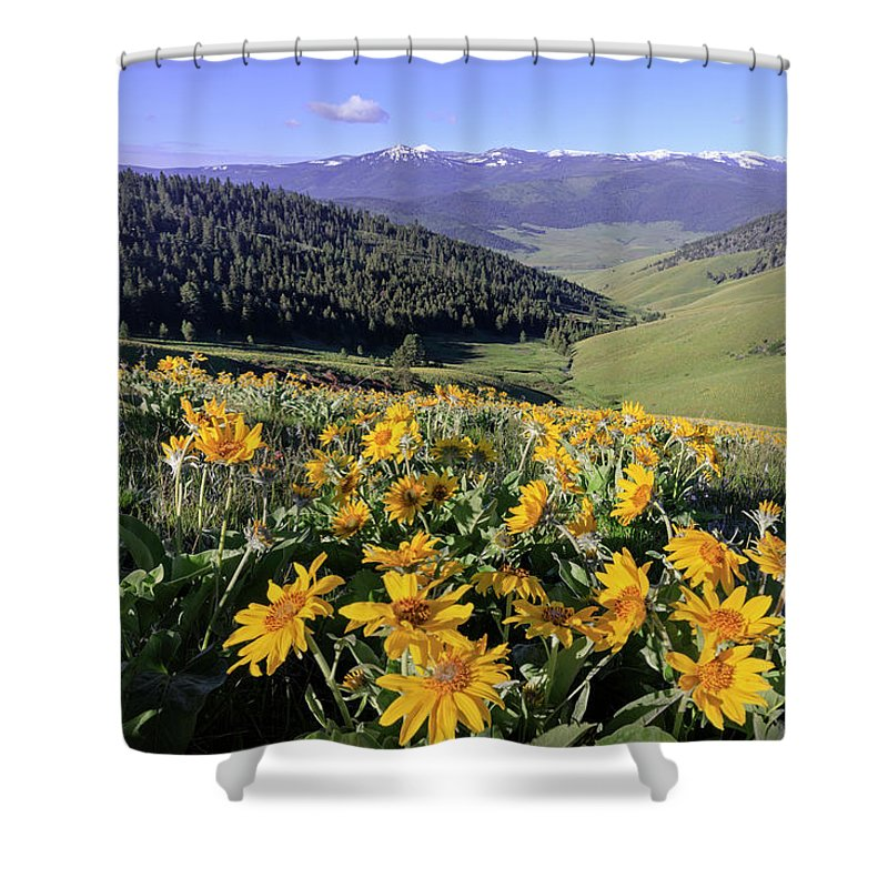 Balsam Shower Curtain featuring the photograph Spring In The Mountains by Jack Bell