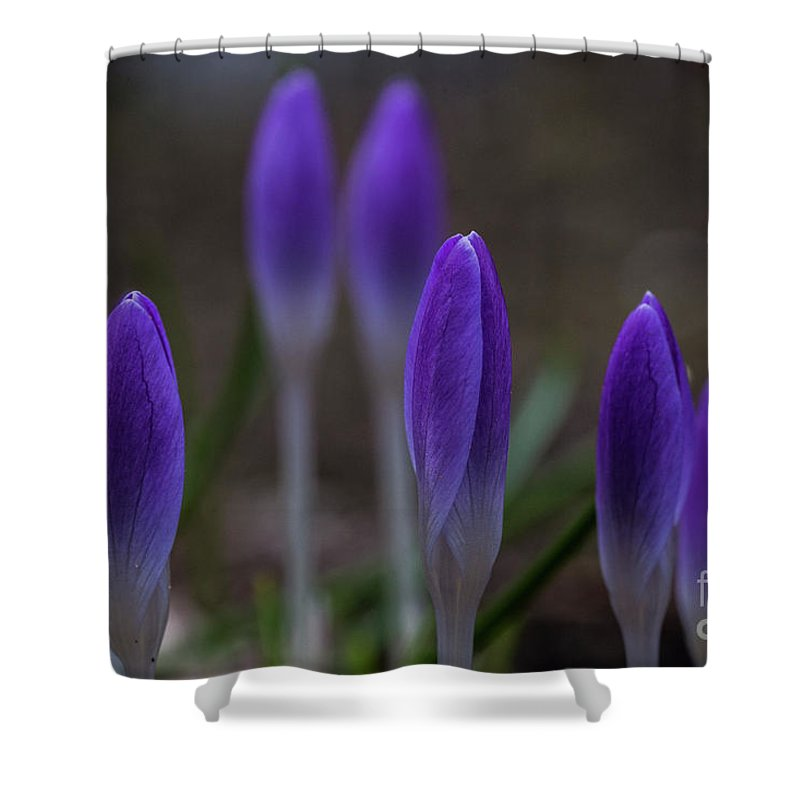 Crocuses Shower Curtain featuring the photograph Flowers by Tino Lehmann