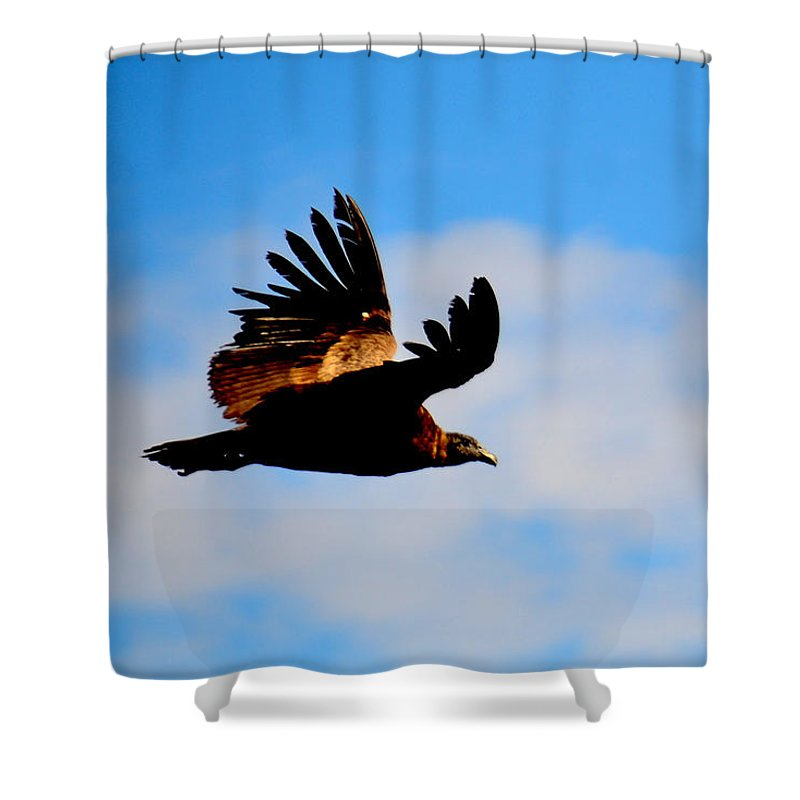 Flying Shower Curtain featuring the photograph Flying Condor by Harry Coburn