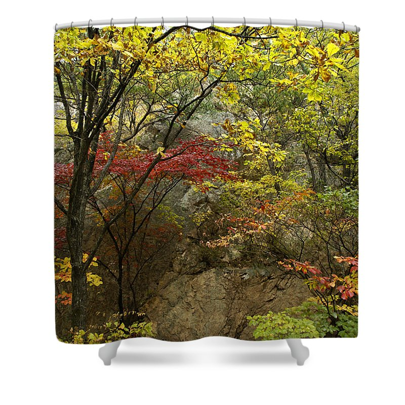Autumn Shower Curtain featuring the photograph Forest In Autumn by Michele Burgess