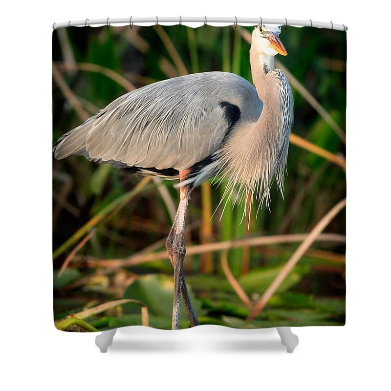 Great Blue Heron Shower Curtain featuring the photograph Great Blue Heron by Matt Suess