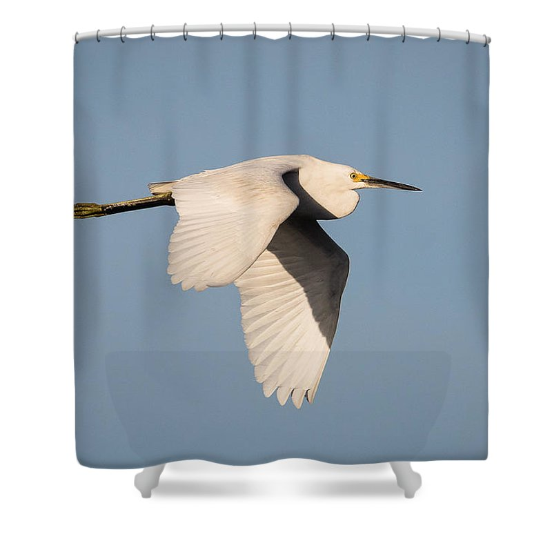 Kevin Giannini Shower Curtain featuring the photograph Great Egret by Kevin Giannini